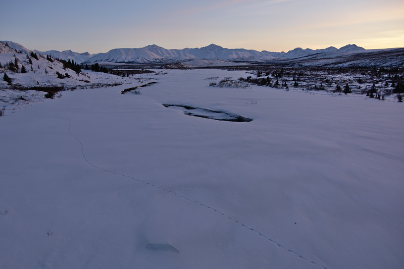 Wolf tracks on the Savage River - Gorgeous light after sunset