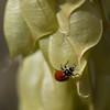 Ladybug in Camp