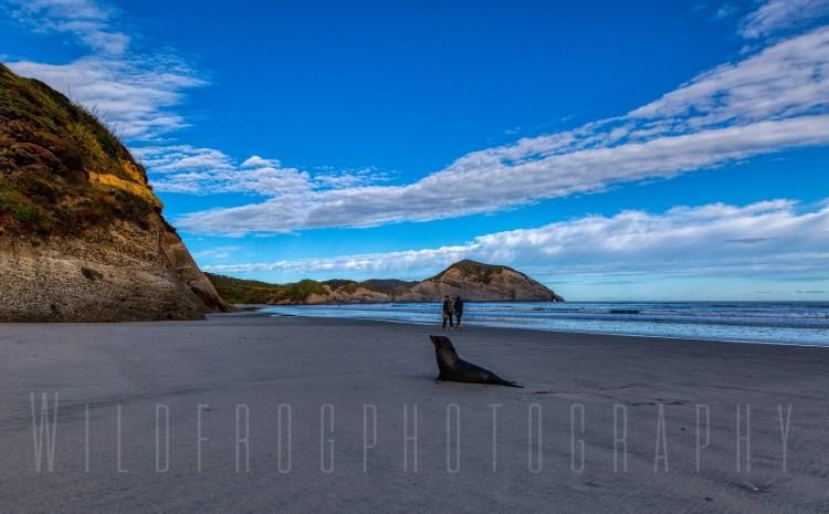 Walkers and Seal on Wharaiki Beach NZ