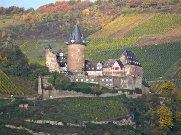 Rhine river castle and vineyard