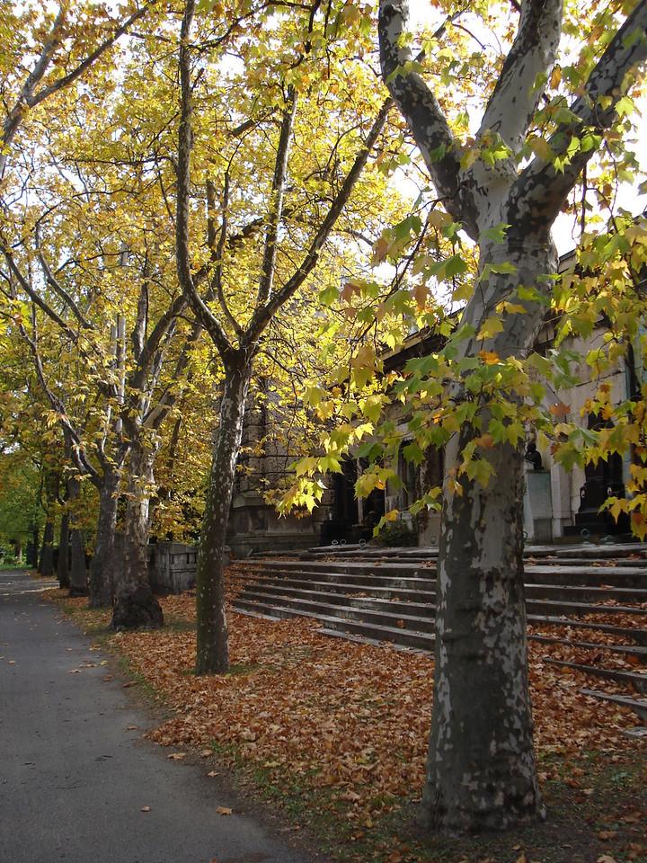 Kerepesi Cemetery Path And Trees