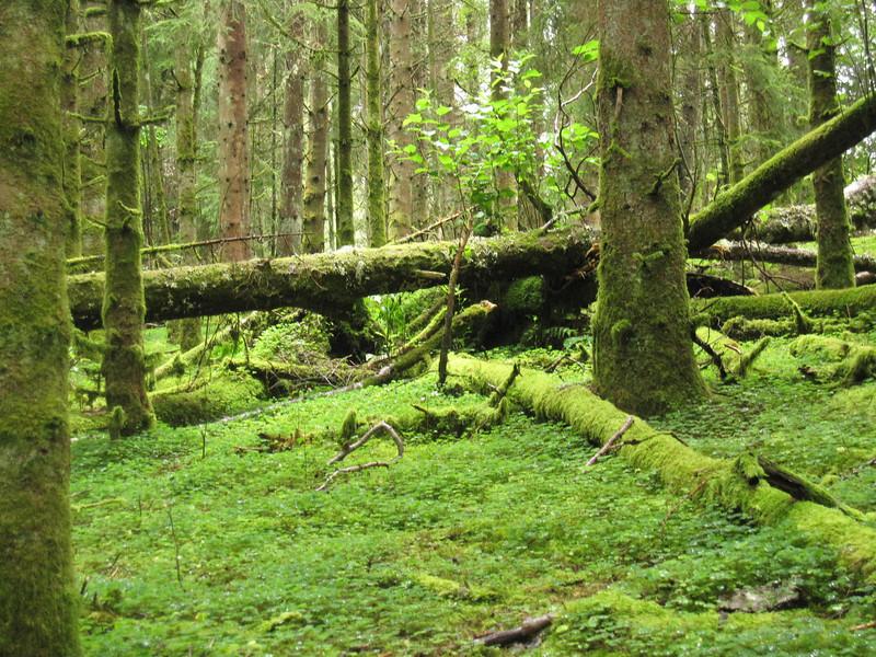 forest walks in scotland