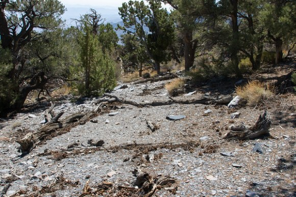 Panamint Wickiup #1