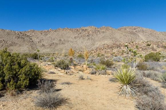 Base of Queen Mountain Pictographs
