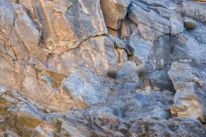"""Purple Opuntia"" Petroglyphs"
