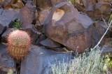 Woods Wash Petroglyphs