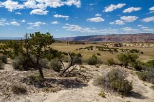 Box Flat and Prickly Pear Flat Cowboy Camps