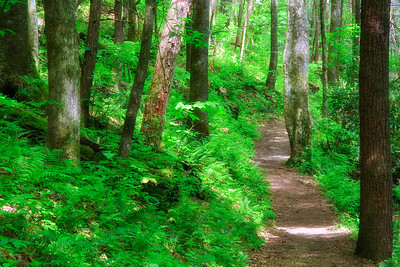 Joyce Kilmer Forest Path