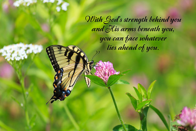 Swallowtail Butterfly with Quote