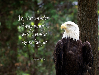 Eagle and Scripture