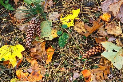 Autumn Ground