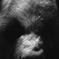 69 Zoo Atlanta 2016-Panda