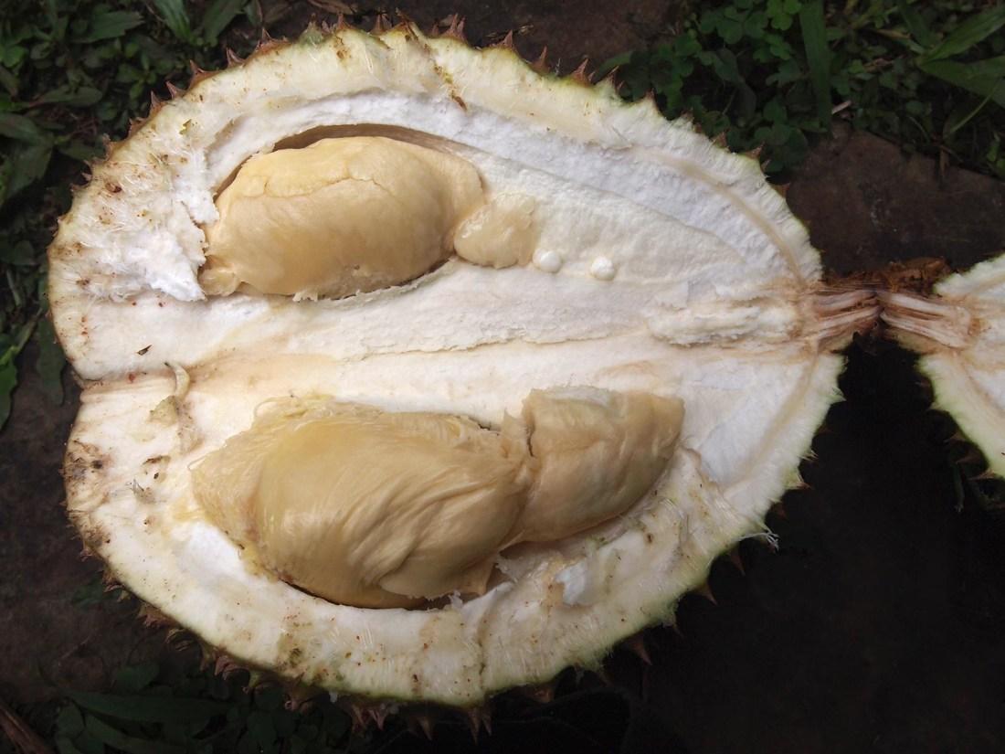 Maui Durian