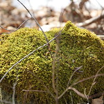 Little Massebesic early spring/mud season hike 4