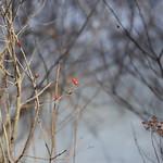 Little Massebesic early spring/mud season hike 8