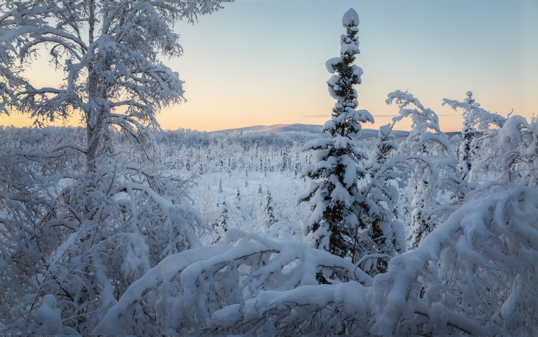 View from behind creamers field in Fairbanks, Alaska