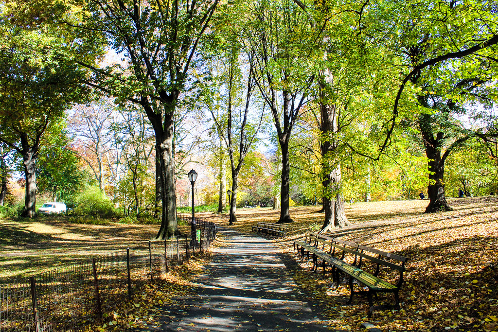 Be sure to wear comfortable walking shoes when seeing Central Park attractions