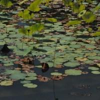 1 Biltmore Estate-Nature