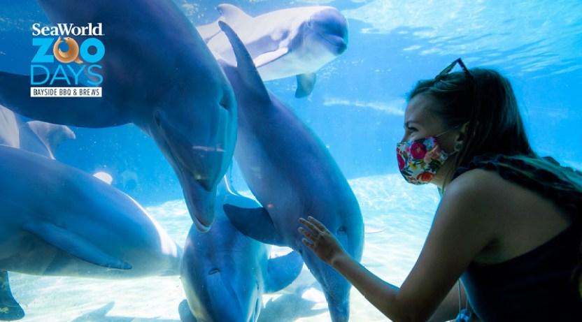 2020_SWF_Dolphin-Underwater-Viewing_Safety-(1)