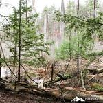 Phyllis Massey Stafford Conservation Area 31