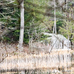 Phyllis Massey Stafford Conservation Area 25