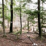Phyllis Massey Stafford Conservation Area 32