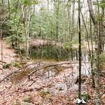 Phyllis Massey Stafford Conservation Area 15