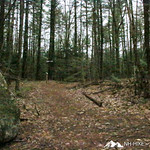 Phyllis Massey Stafford Conservation Area 8