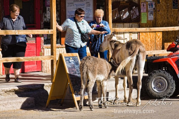 Burros in Oatman village on route 66, Arizona