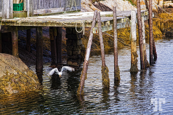 Low tie at Peggy's Cove, Nova Scotia
