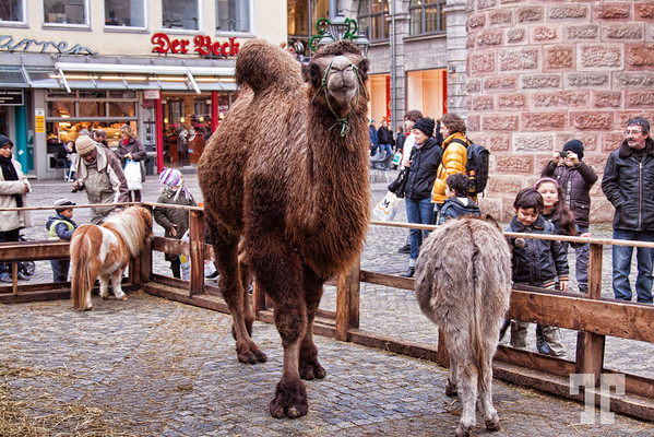 Mini zoo downtown Nuremberg, Germany