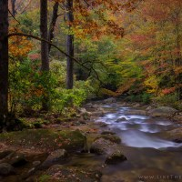 Magic of Fall