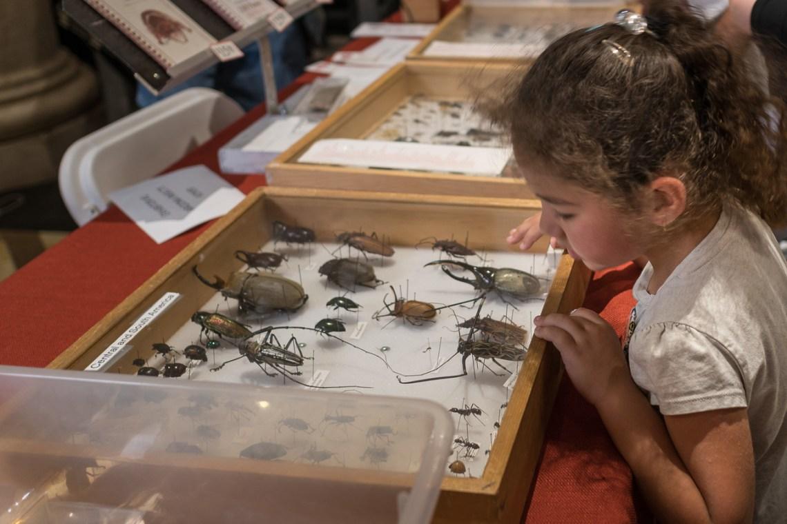 Peering at a vendor's beetle display at the Bug Fair