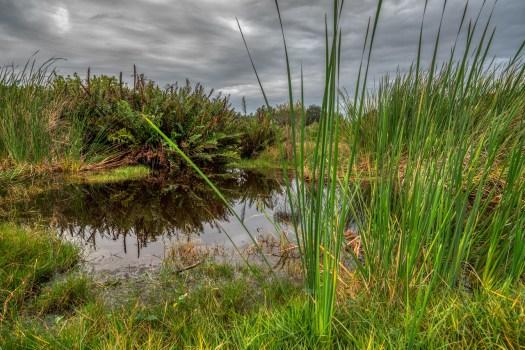 The bayou in Palmetto, Florida