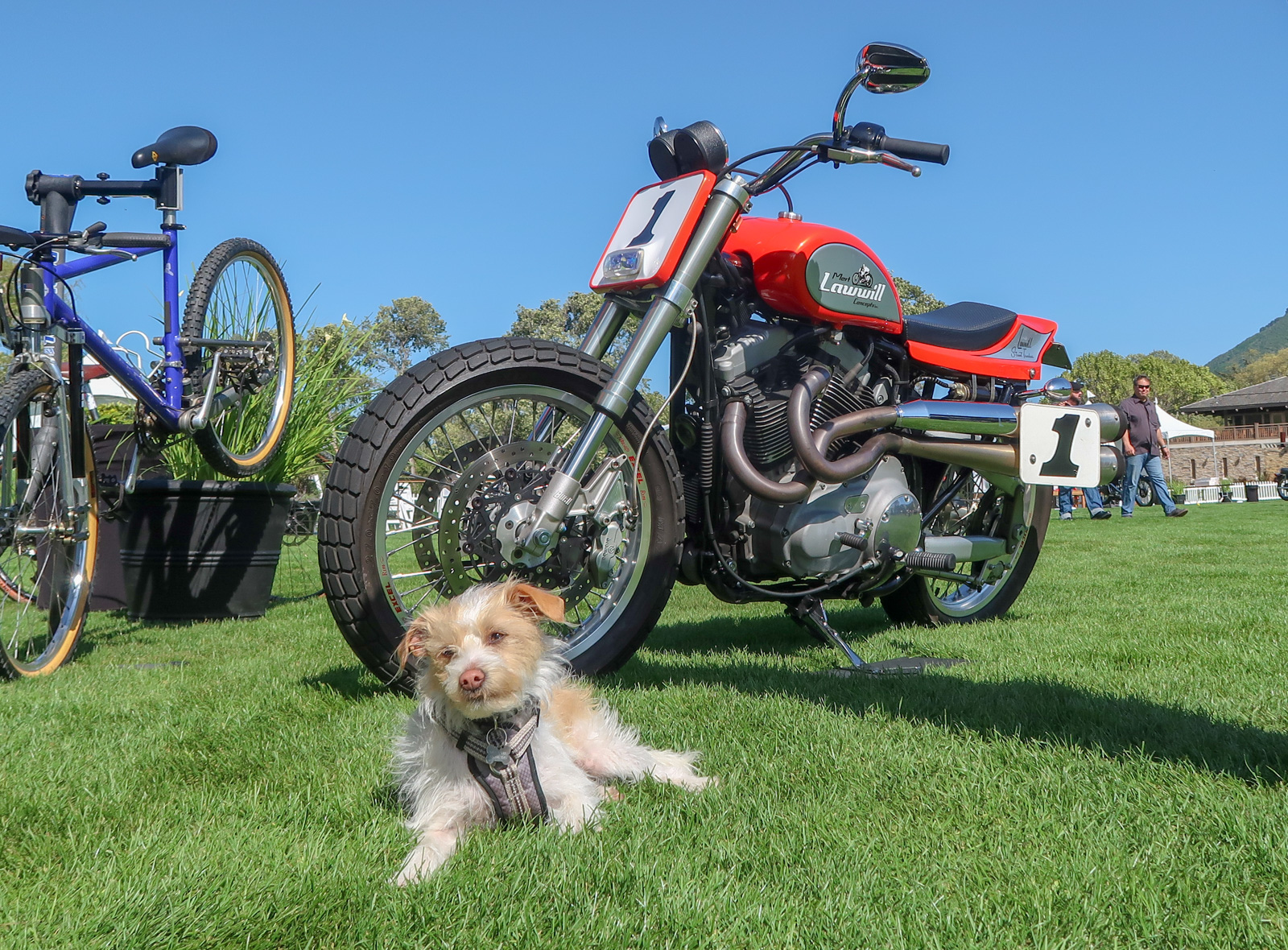 Picture Intermission – Dogs of the 2019 Quail Motorcycle Gathering