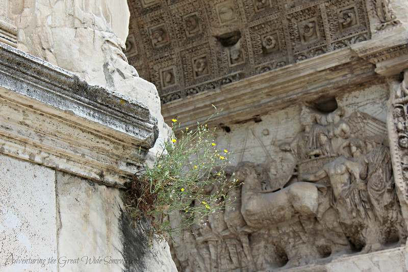Vibrant yellow and green blooms growing out of the Arch of Titus at the Roman Forum in Rome, Italy.