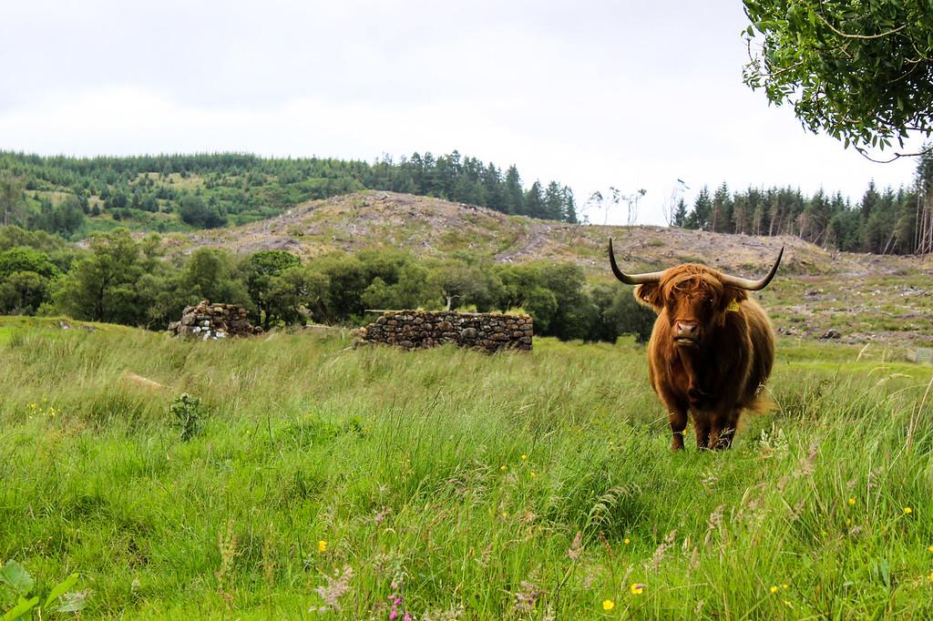 solo female travel scotland