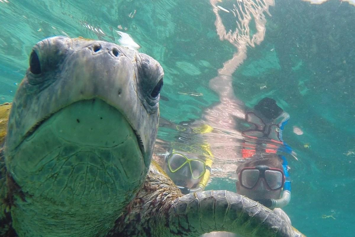 galapagosøerne på et budget