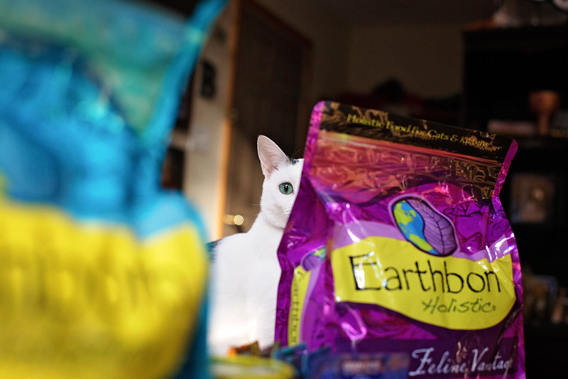 #ad Make the seven-day switch with Earthborn Holistic for your cat. There are so many reasons to love this brand. For example, they have never had a recall!