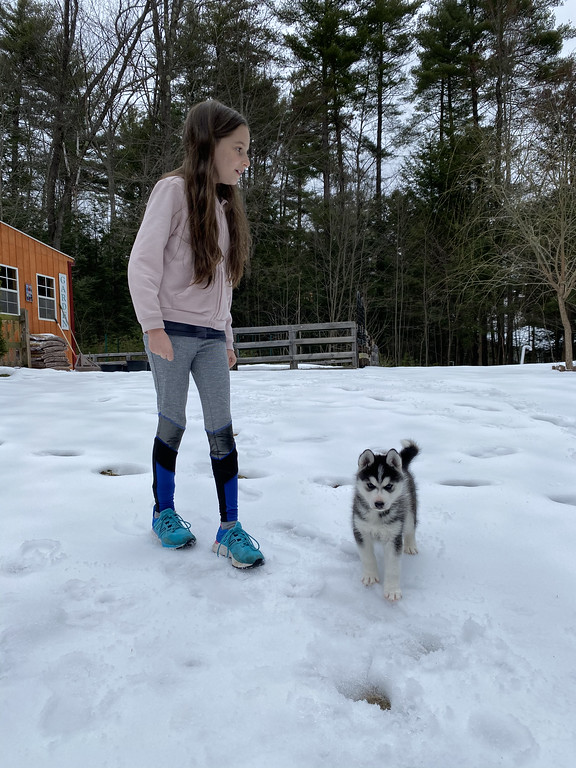 This is our story of getting a puppy, a gorgeous, six-week-old Siberian Husky named Lucy, during the Coronavirus (COVID-19) several weeks staying at home.