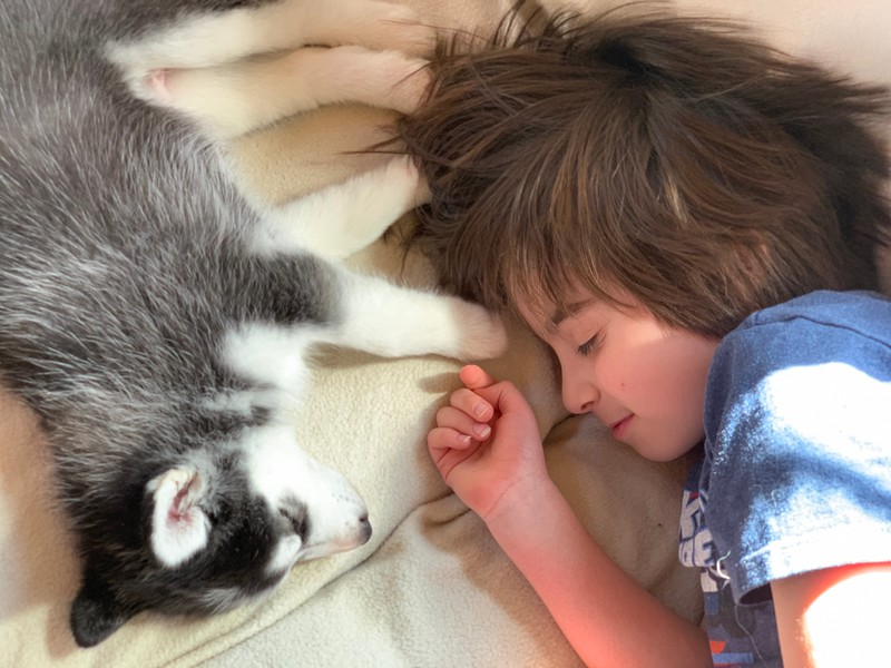boy and his dog