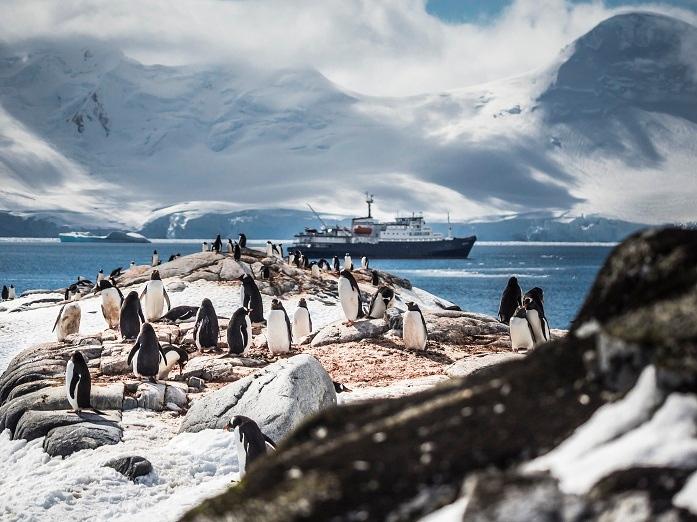 "Northern Lights Cruises Antarctic Peninsula, Port Lockroy, gentoo penguins, ship ""Plancius"" in the background, travel, cruise, polar cruise, expedition cruise, polar"