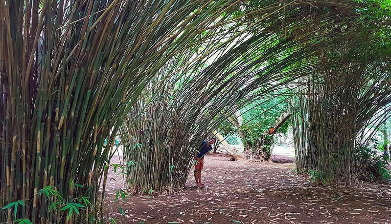 Short Guide to Mauritius - Botanical Garden