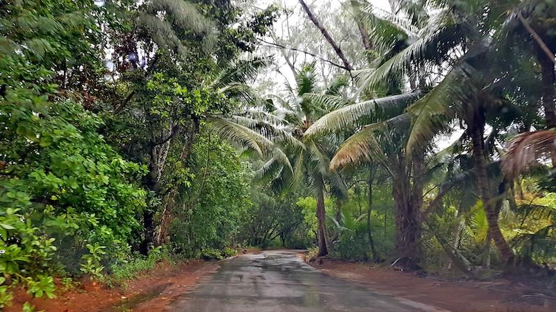 Seychelles - Praslin jungle