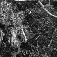 36 Garden of the Groves, Freeport, Bahamas in Black and White
