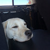 """Doggie equivalent of """"Are we there yet?"""""""