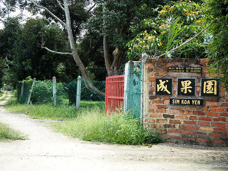 Sim Koa Yen durian farm