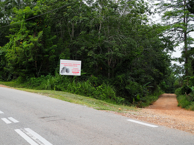 getting to lucky's durian farm