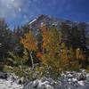 Aspen and Olsen Peak