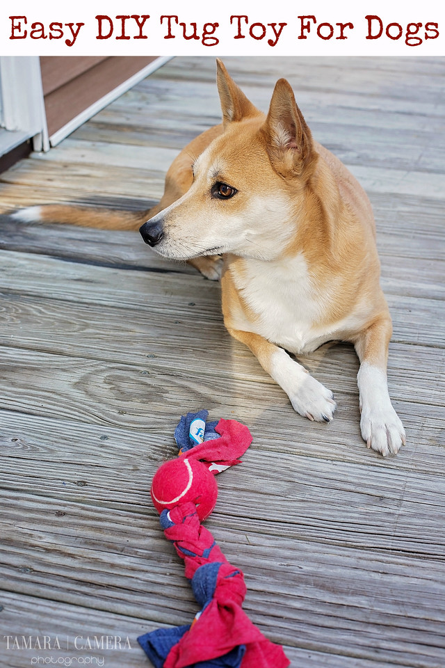 Is your dog a fan of the traditional tug toy? Here's a #DIY way to make one, using items from your house - a t-shirt and a tennis ball. #FeedDogsPurina #ad